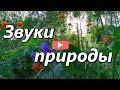 Звуки природы пение птиц звуки леса mp3