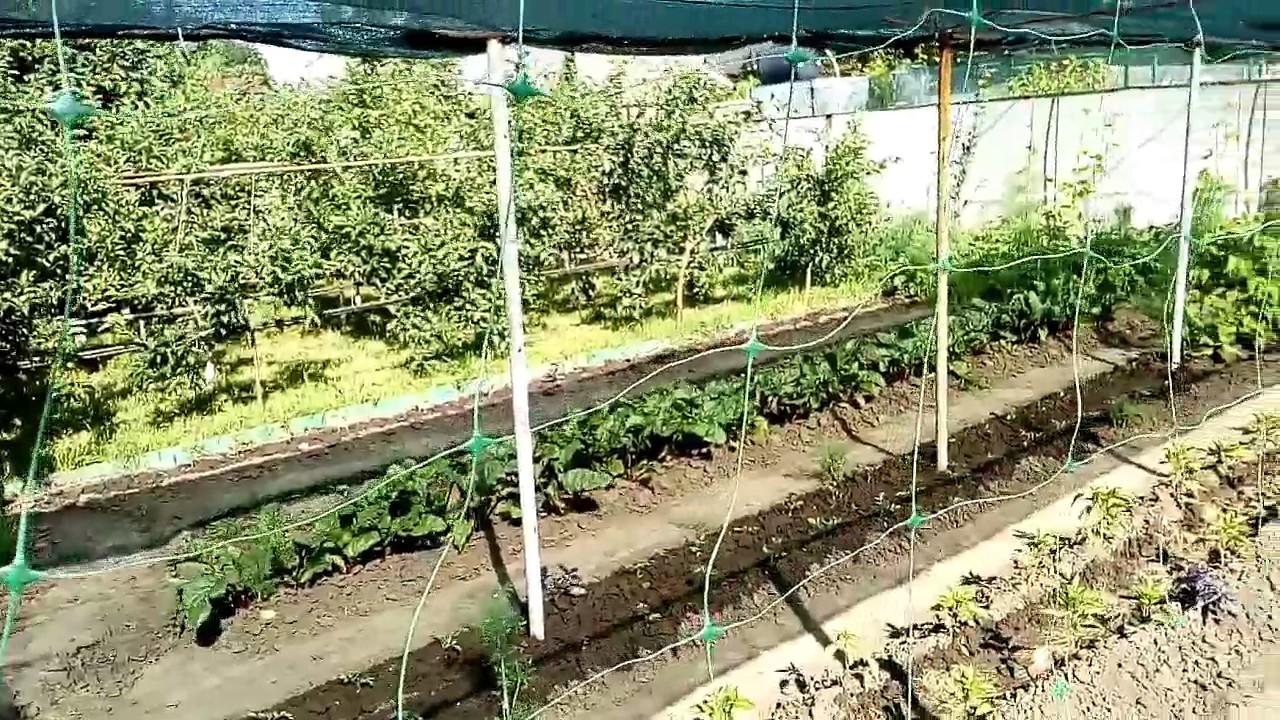 Как выращивать огурцы на сетке в теплице: обзор видов и инструкция по монтажу