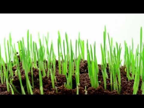 RECOGES LO QUE SIEMBRAS: Utiliza semilla certificada