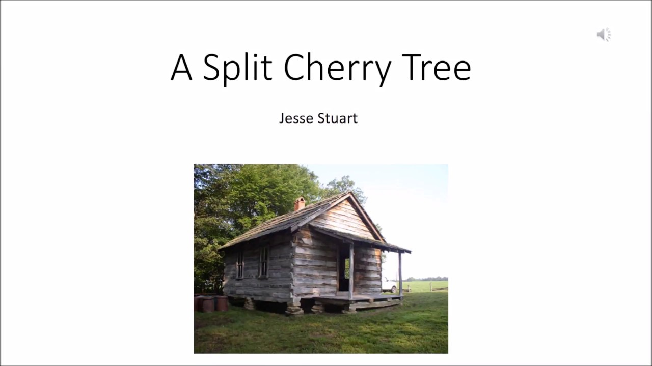 split cherry tree short story