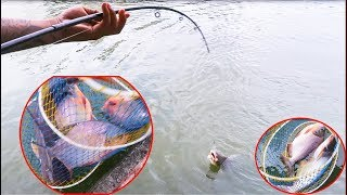 Đi Câu Cá Cho Vui Không Ngờ Gặp Cá Khủng Giật Sướng Cả Tay