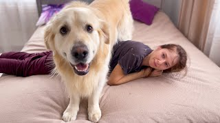 Funny Golden Retriever Attacks His Human Mom [TRY NOT TO LAUGH]