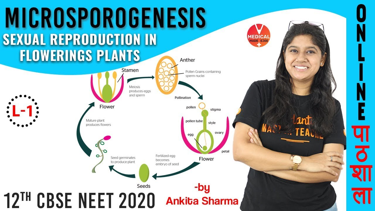 Microsporogenesis | Sexual Reproduction in Flowering Plants | Class 12 Biology Chapter 2 | NEET Exam