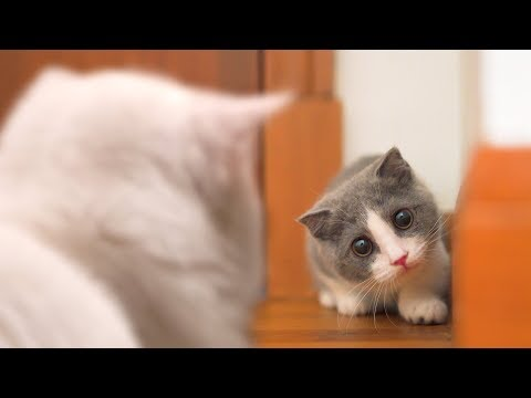 New Kitten Meets Cats For The First Time