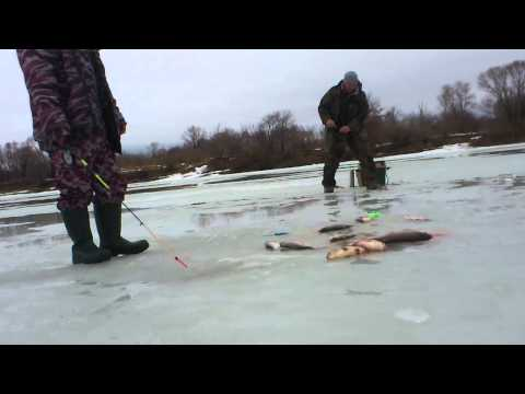 ловля рыбы на шарик видео