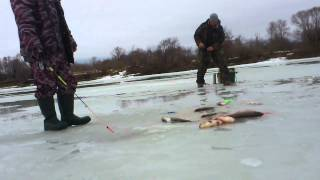 Ловля на течении зимой-лентяйка,шарик,дергуша..mp4
