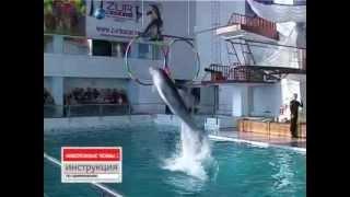 Видеоролик о дне рождения в челнинском дельфинарии.avi