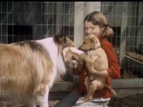 "Lassie - Episode #393 -  ""Little Dog Lost"" - Season 12, Ep.8   - 10/31/1965"