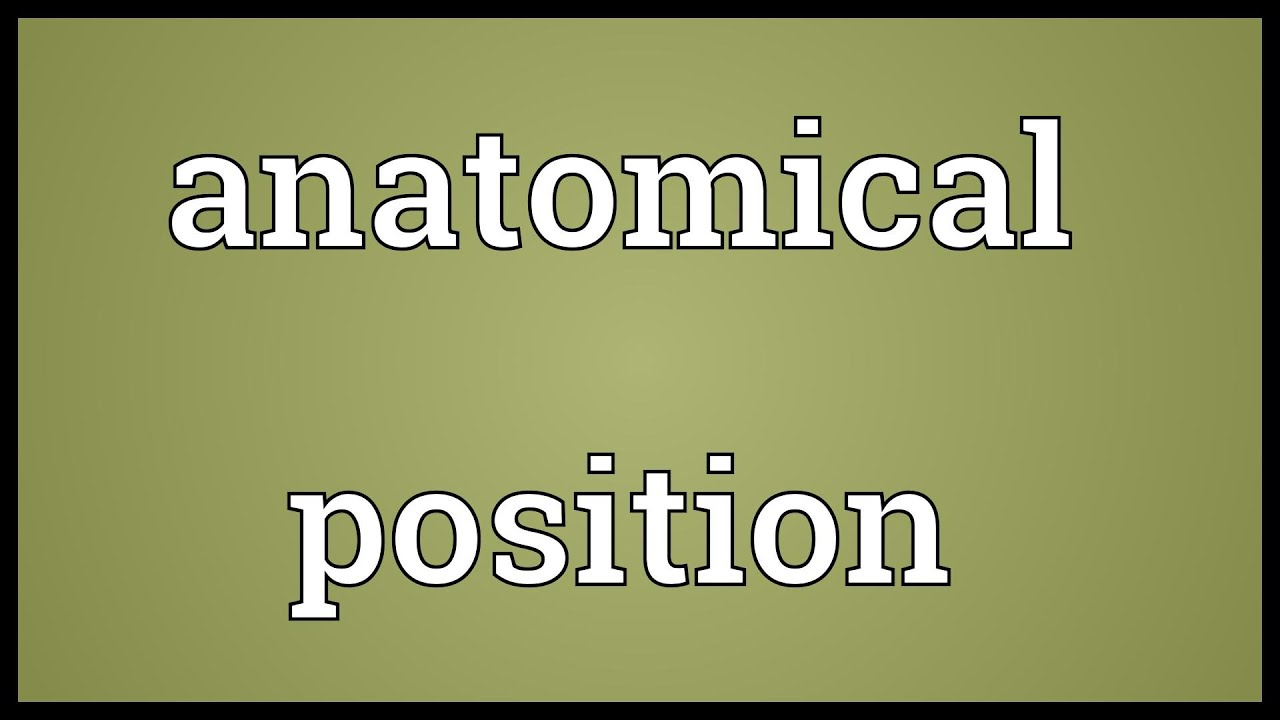 Anatomical position Meaning - YouTube