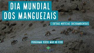Dia Mundial de Proteção aos Manguezais e outras notícias socioambientais