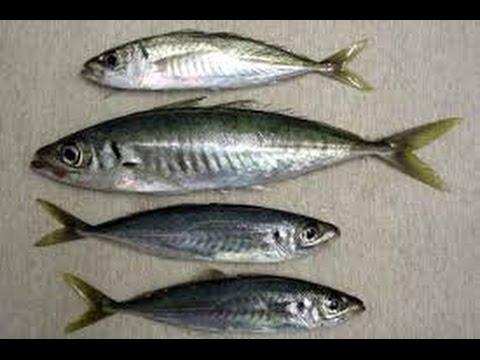Как сделать самодур для рыбалки