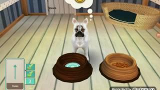 Обзор игры Dog Hotel (часть 1)