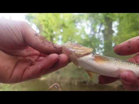 Secret creek fishing surprise catch!!!