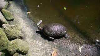 Nl Kallenkote ' Taman Indonesia Exotisch dierenpark'