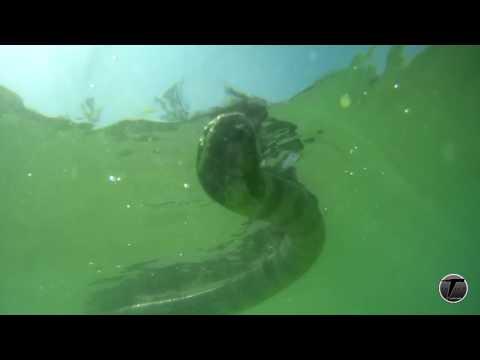 งูทะเล เร็วๆนี้