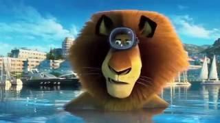 Madagascar prikol  18+ super  gulmeli video.