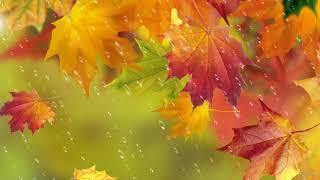 Осень рыжая кошка