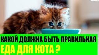 Какой должна быть правильная еда для кота?
