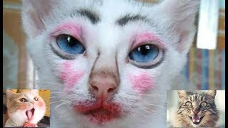 Video tingkah lucu kucing gemesin bikin ketawa ngakak