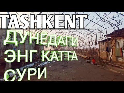 Пригороды Ташкента-16 Йиллик
