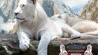 Крым - парк львов