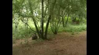 Парк у ДК Химиков (на месте старого кладбища) 2(, 2012-11-24T13:29:42.000Z)