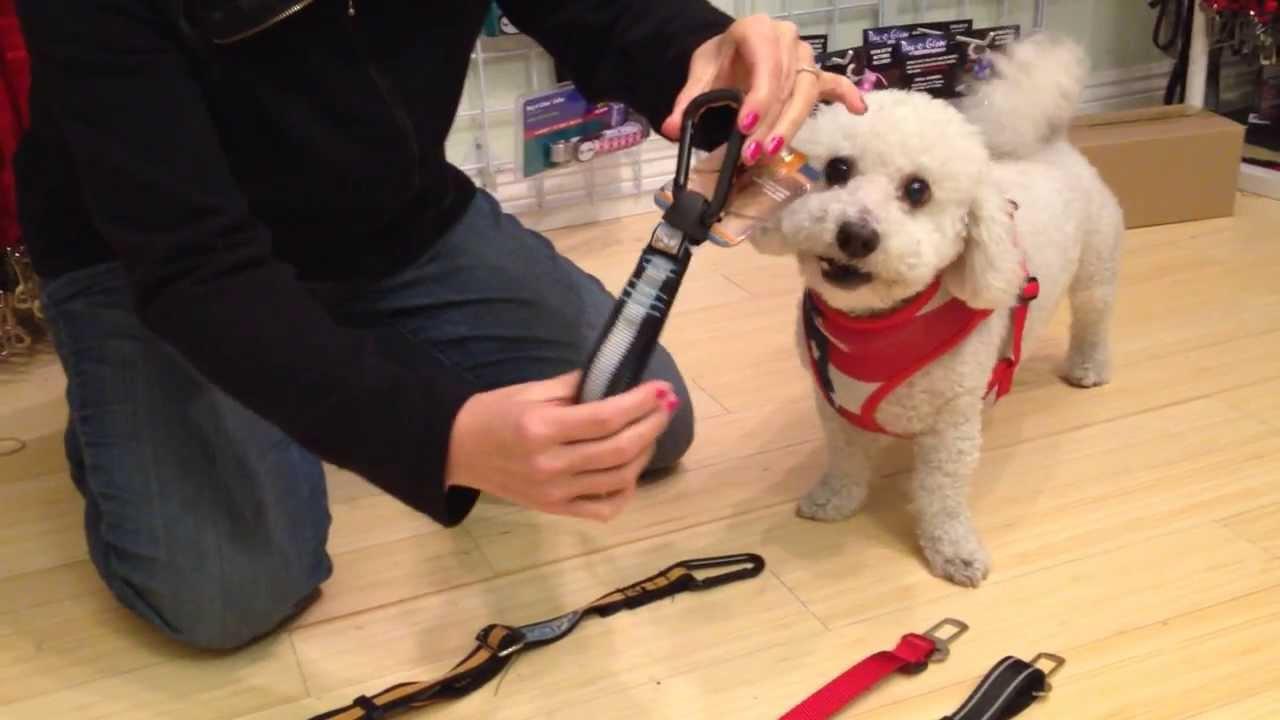Best Dog Seat Belt >> Which Doggie Seat Belt Is Best For You Keep Doggie Safe