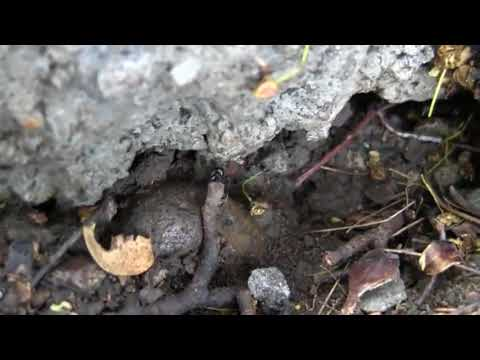 pest-control-portland-on-carpenter-ants-part-1
