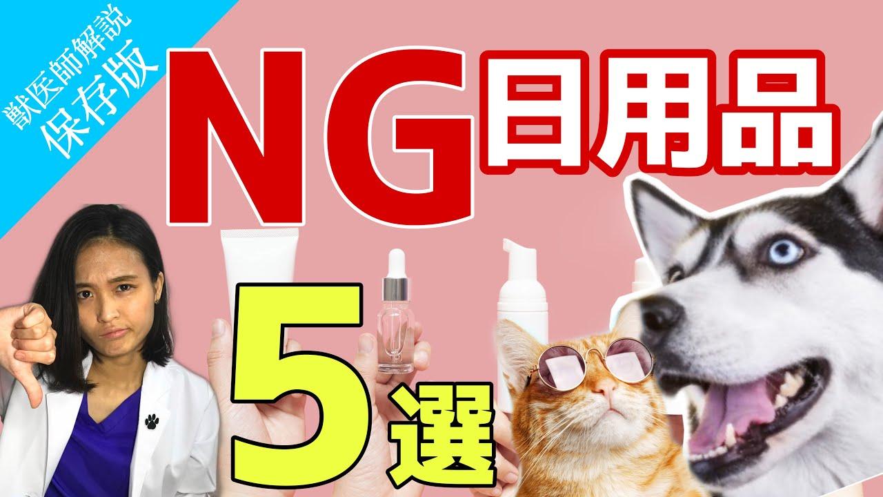 【あなたの知らない危険物】湿布やハンドクリーム舐めさせてない…⁈ 実は犬と猫に危険な日用品5選!