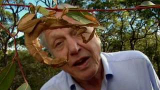 The Stick Insect