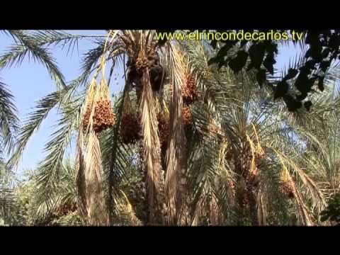 El rincón de Carlos:Túnez del Mediterráneo al desierto