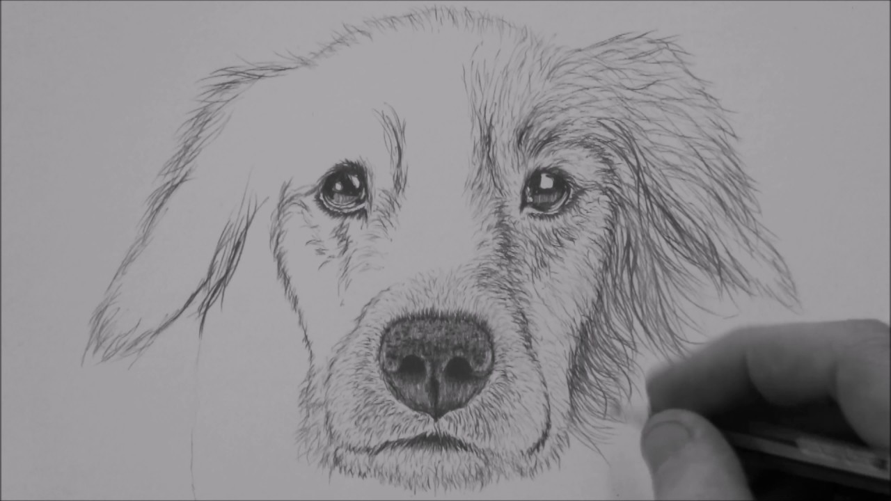 How To Draw Dog Step By Step For Beginners - YouTube