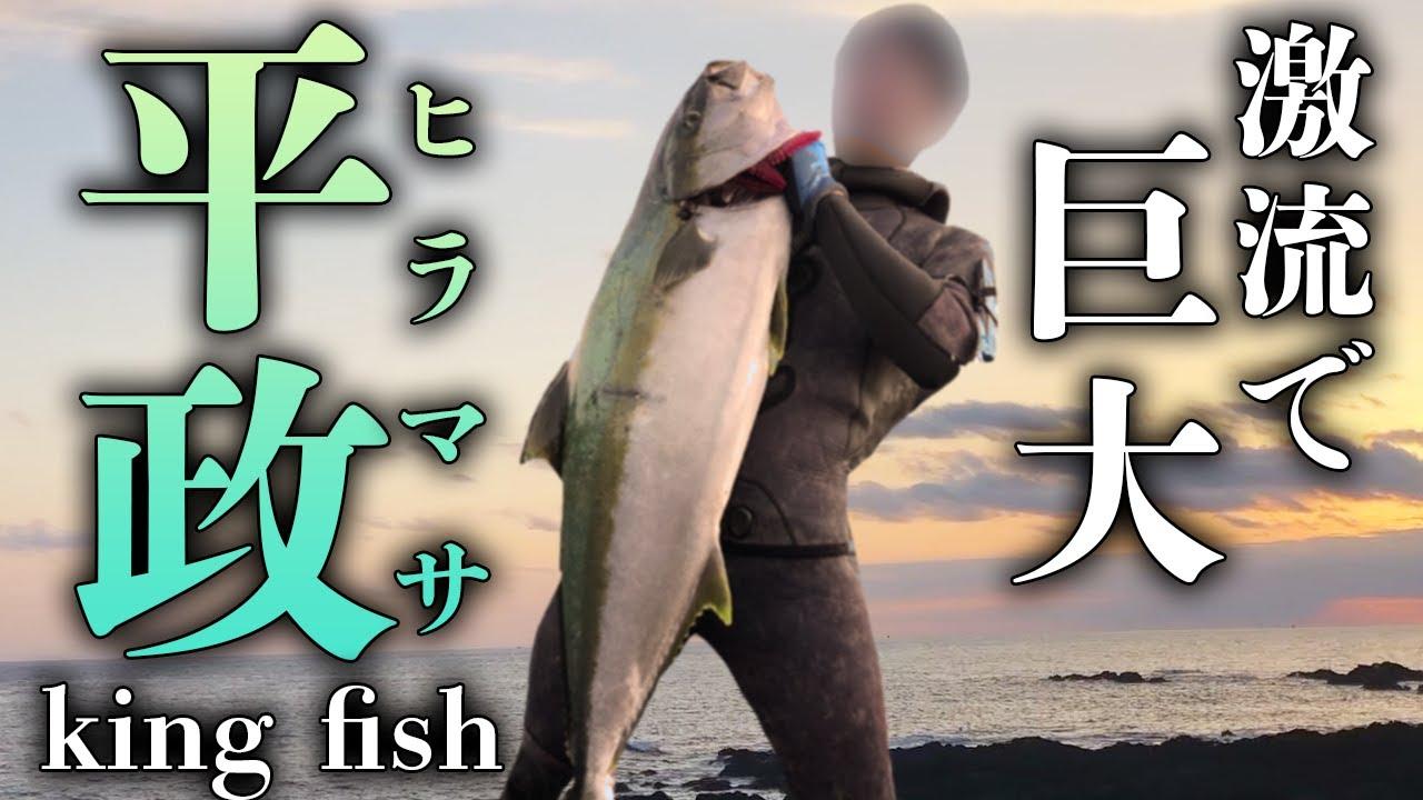 巨大ヒラマサ 120cm 15kg【魚突き】