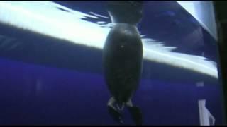 подводный мир оз байкала(Этот ролик обработан в Видеоредакторе YouTube (https://www.youtube.com/editor), 2016-03-15T21:32:44.000Z)