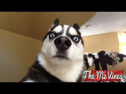Best Funny Dog Vines 2015 | PART 2