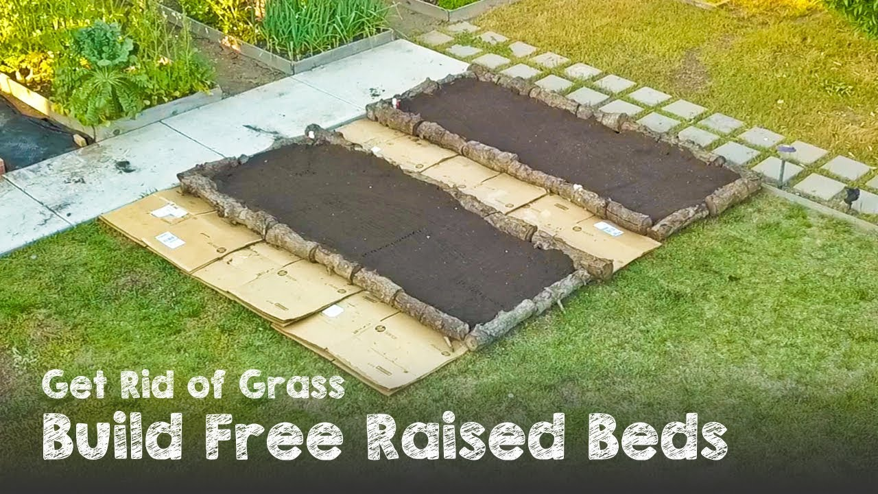 Get Rid Of Grass And Build Raised Beds For Free Youtube