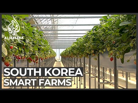 South Korean farmers embrace hi-tech methods