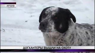 В Нижнем Тагиле догхантеры раскидывают яд для собак