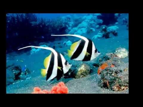 The world paints paints-underwater world.