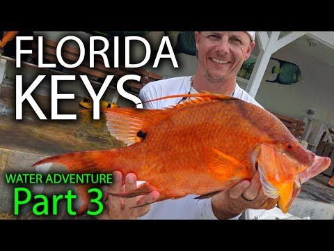 HOGFISH Catch And Cook - BEST Fish To Eat In The Ocean -  Florida Keys Water Adventure Part 3