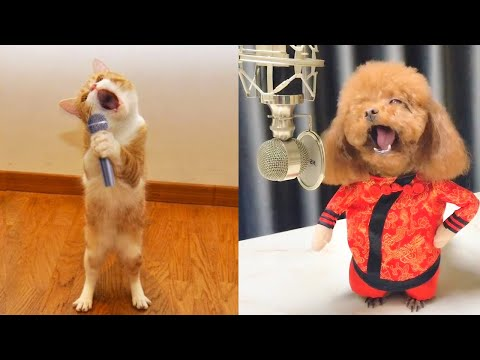 Best Talent - Cute and Funny Animals Videos Compilation | Aww Animals