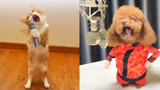 Best Talent  Cute and Funny Animals Videos Compilation | Aww Animals