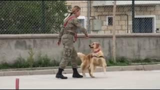 JAKEM Eğitimli Köpeklerin Gösterileri