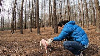 犬を林に放置してみたら...3万平米のドッグランで大暴れ thumbnail