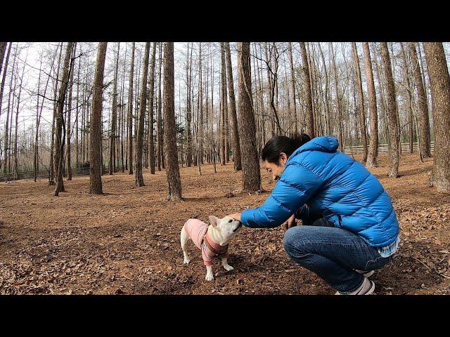 犬を林に放置してみたら…3万平米のドッグランで大暴れ