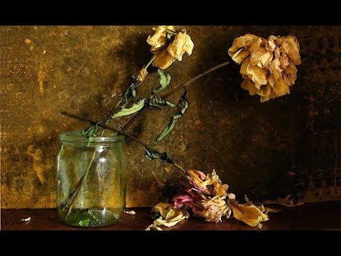 Вопрос: Почему нельзя в доме держать розу в горшке?