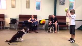 Alpha Dog Training Plymouth