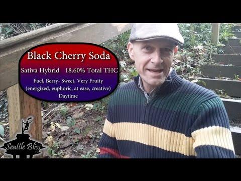 Black Cherry Soda Marijuana strain product review