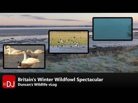 England's Winter Bird Spectacular | vLog #3 | Nature Travel Guide
