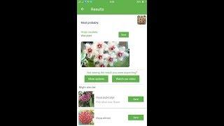 PlantSnap identifies a Wax plant (Hoya caudata)